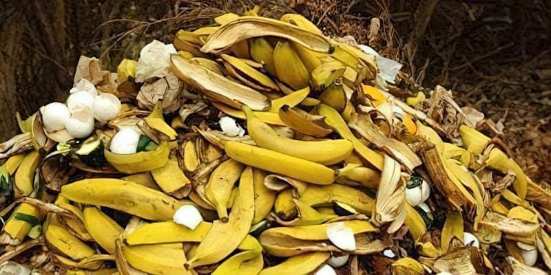 Добриво з бананових шкурок: 15 незвичайних способів їх застосування 3