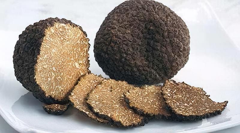 Секрети вирощування трюфелів в домашніх умовах 1