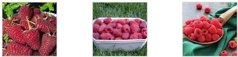 Урожай великої малинки Урожай малинки в коробочці Урожай малини в мисці