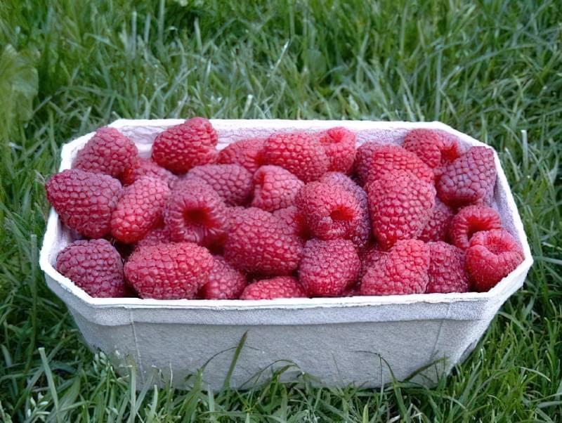 Урожай малинки в коробочці