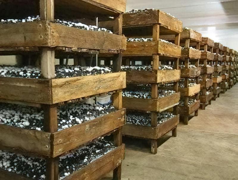 Стартовий капітал для бізнесу на грибах - 100 тис грн.