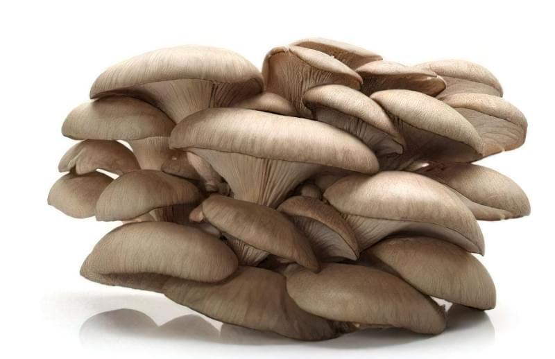 Вирощування глив – справа прибуткова