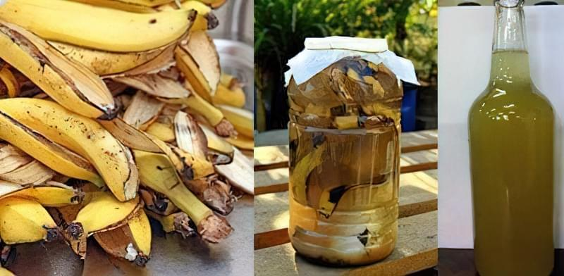 Як зробити добриво з бананової шкірки: 5 рецептів 53
