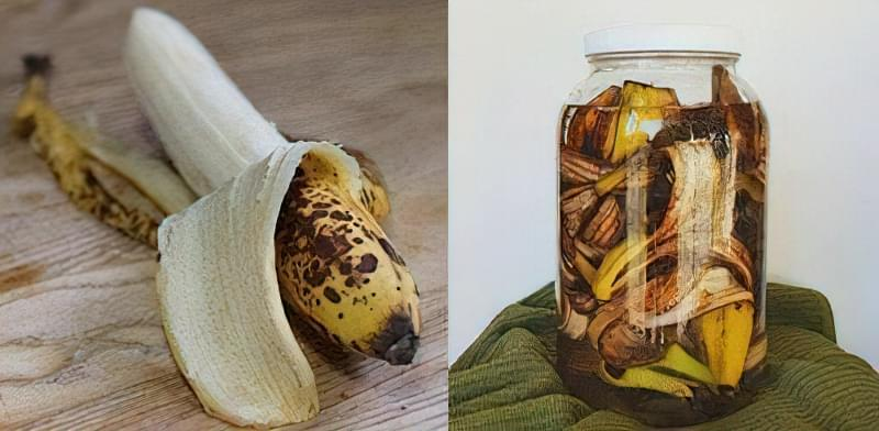 Як зробити добриво з бананової шкірки: 5 рецептів 4