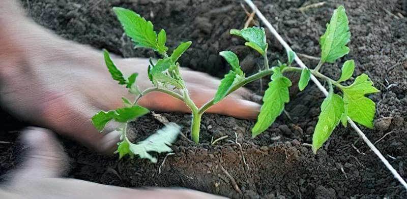 Сприятливі дні для висадки розсади овочевих культур в 2018 році