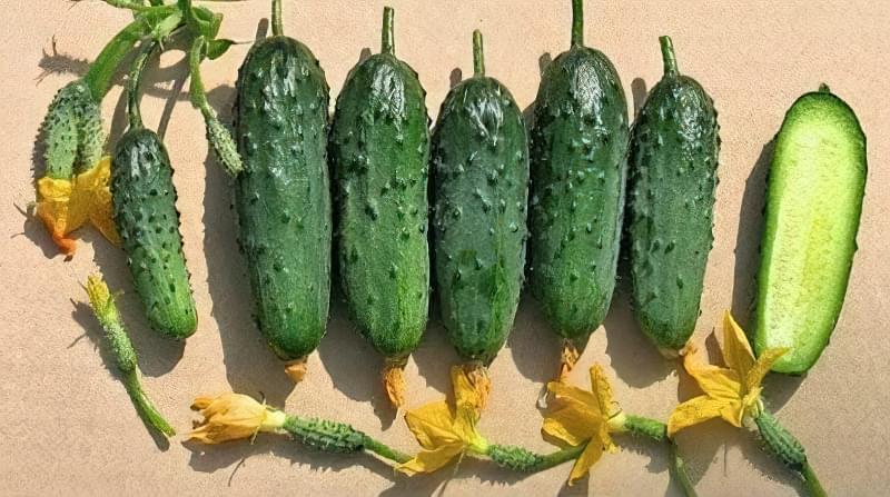5 кращих сортів огірків для вирощування 1