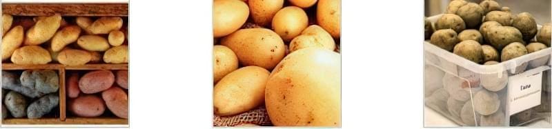 Чим обробляти картоплю перед посадкою? 1