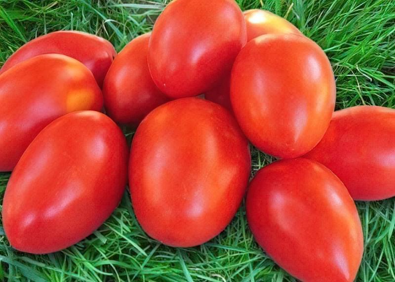 Фото помідорів сорту акварель