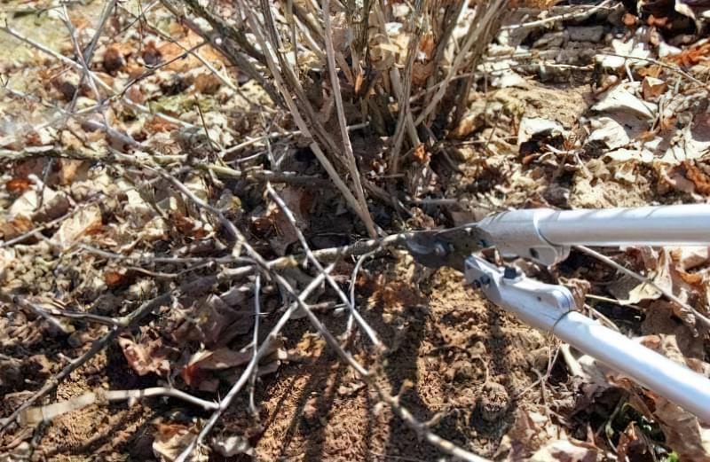 Обрізка підвищить врожайність