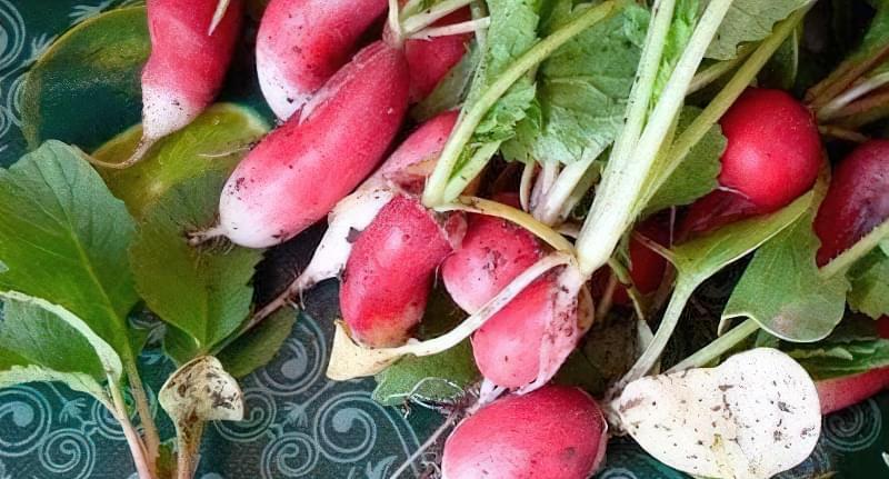 Редис можна легко вирощувати вдома
