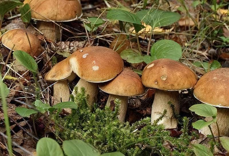 Секрети вирощування грибів на власній дачі