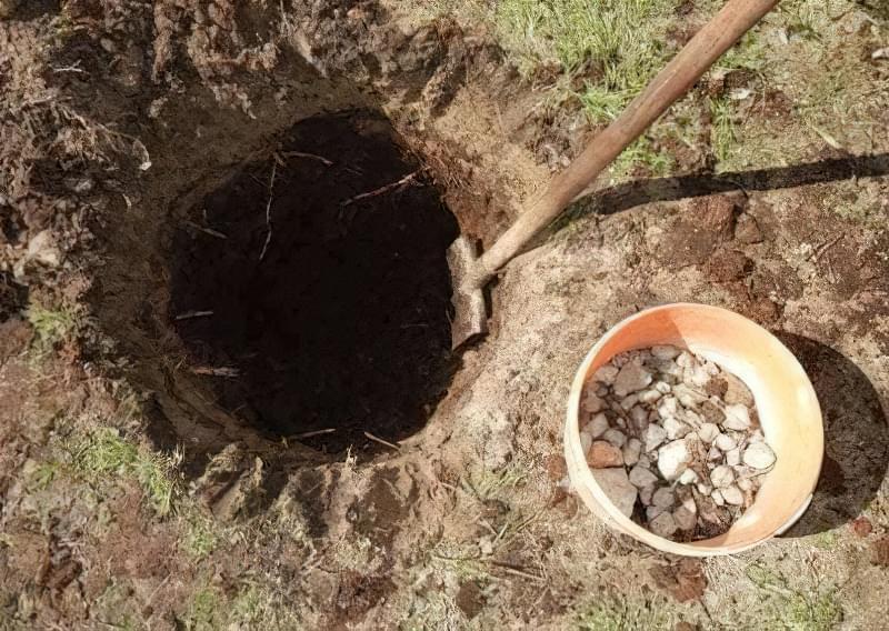 Підготовка ями для посадки саджанця