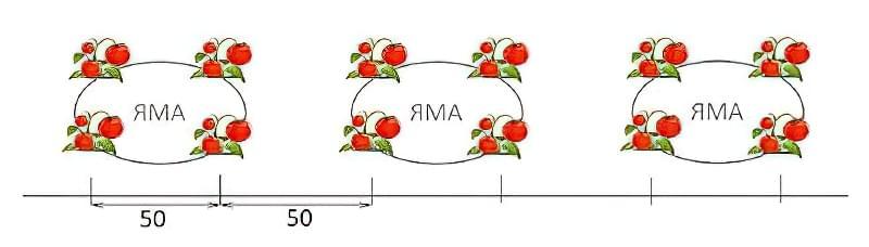 Як збільшити врожай томатів: перевірений спосіб 2