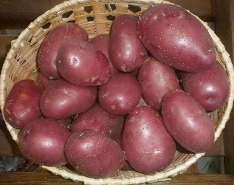 Червона картопля в кошику