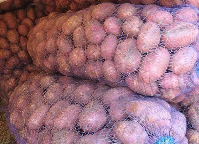 Зберігання картоплі в мішках
