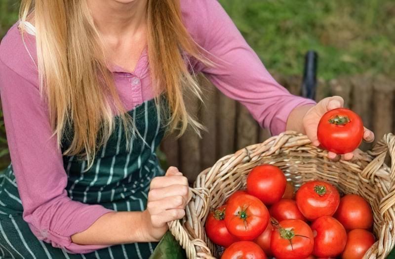 Кращі сорти томатів, стійких до хвороб 2