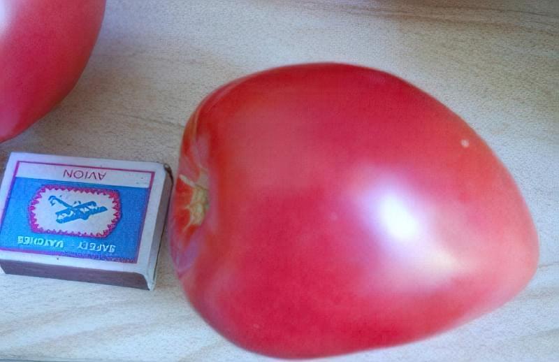 Кращі сорти томатів, стійких до хвороб 4