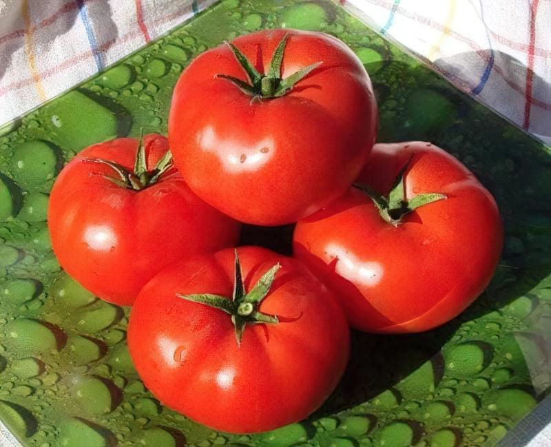 Популярний сорт томатів Аляска
