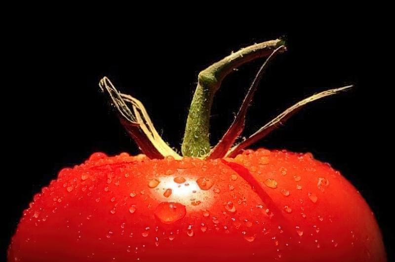 На гідропоніці спостерігається висока врожайність та якість томатів