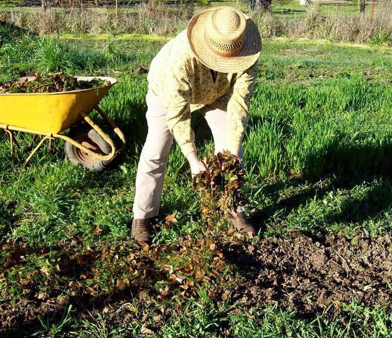 Процедура удобрення грунту восени