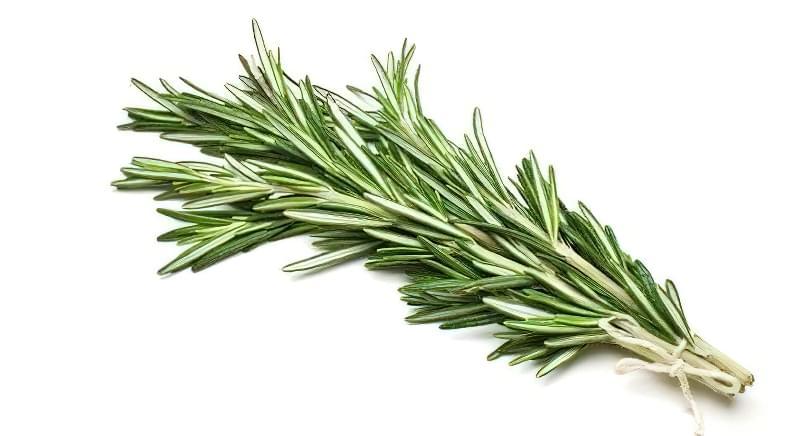 Вічнозелена рослина размарин