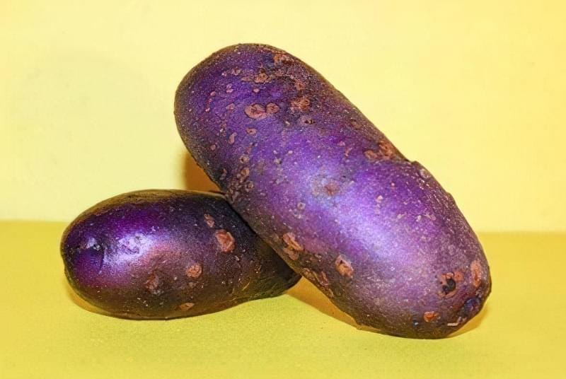 Картопля фіолетового кольору підходить для різних цілів