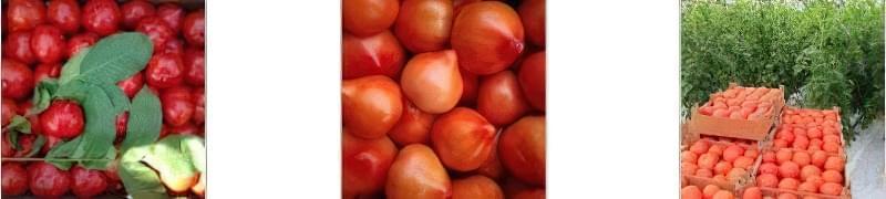 Чорна ніжка у помідор: заходи боротьби 2