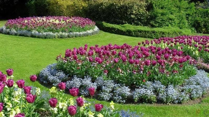 8 основних видів квітників 2