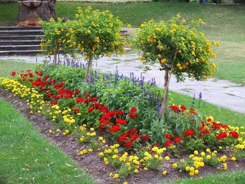 8 основних видів квітників 4