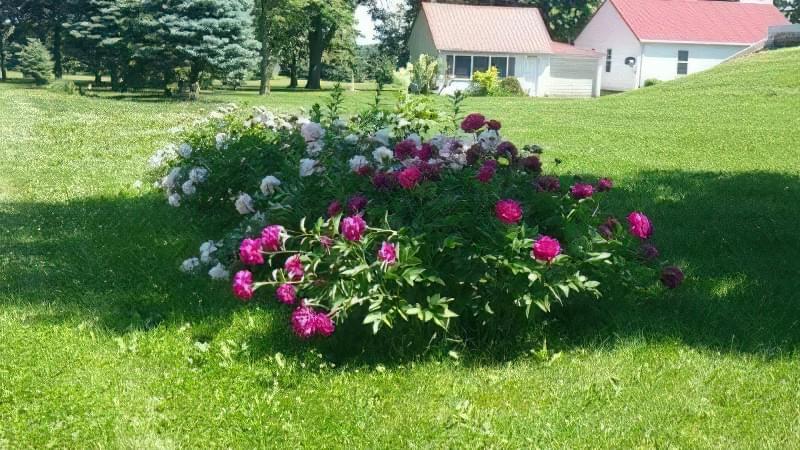 8 основних видів квітників 7