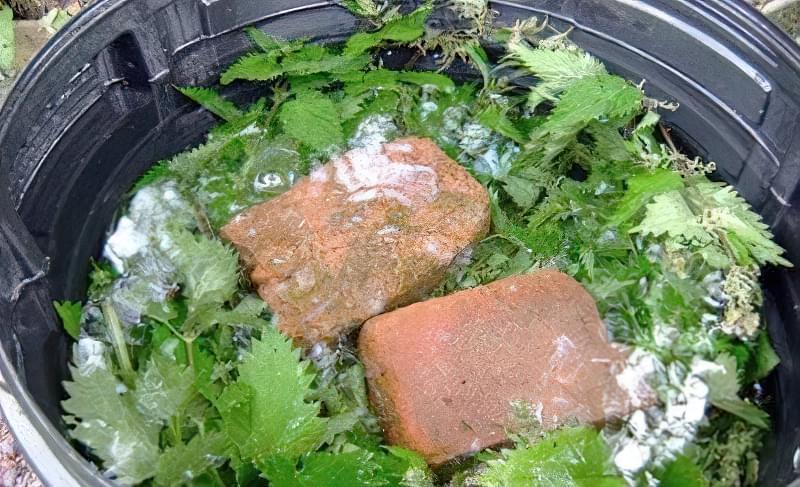 Добриво для томатів з дріжджів і кропиви