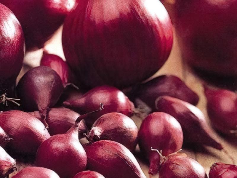 Голландські сорти цибулі-сіянки: опис і вирощування 2