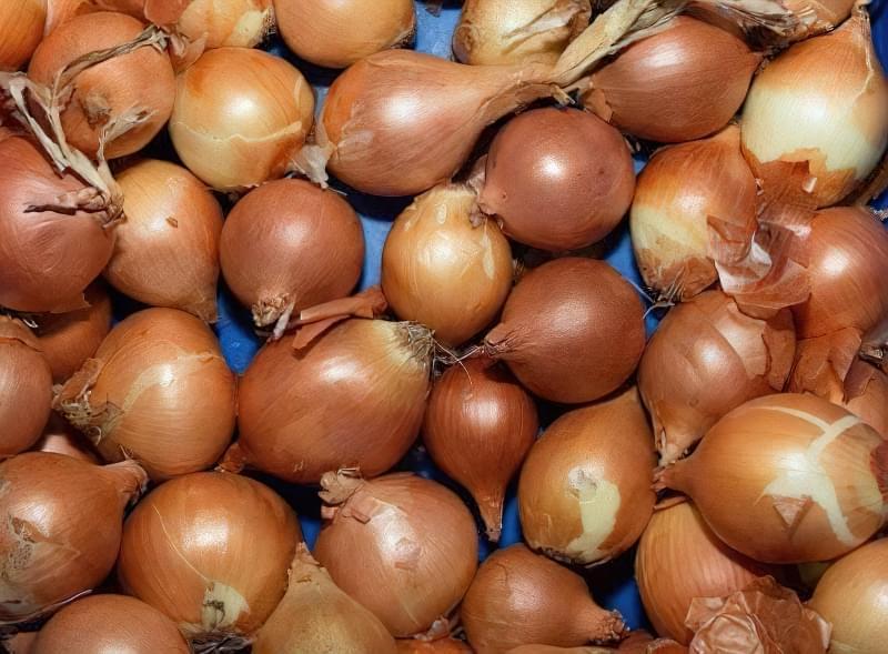 Голландські сорти цибулі-сіянки: опис і вирощування 3