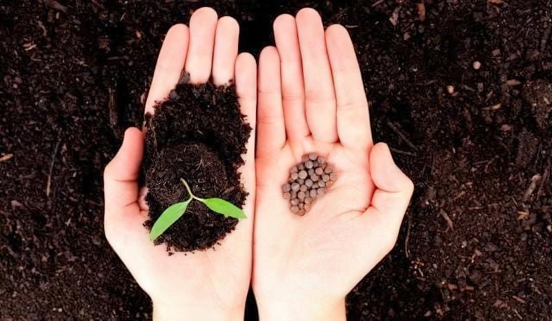 Готуємо насіння до посіву на розсаду: етапи і способи 1