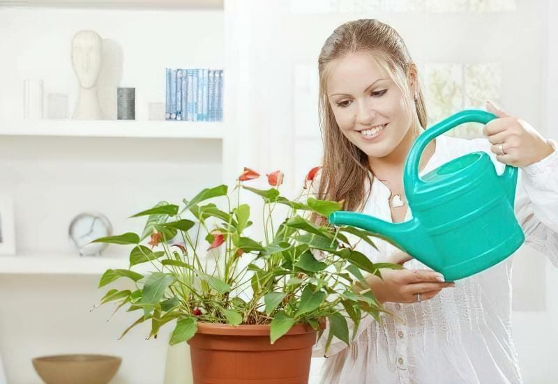 Коли і як підгодовувати кімнатні рослини? 3