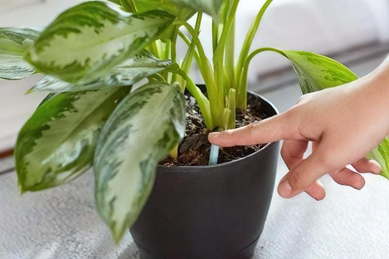 Коли і як підгодовувати кімнатні рослини?