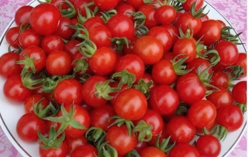 Плоди сорту Черрі, одні з найбільш маленьких томатів