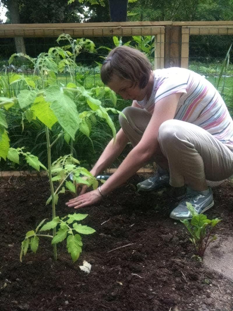 Основні помилки при вирощуванні помідорів 4