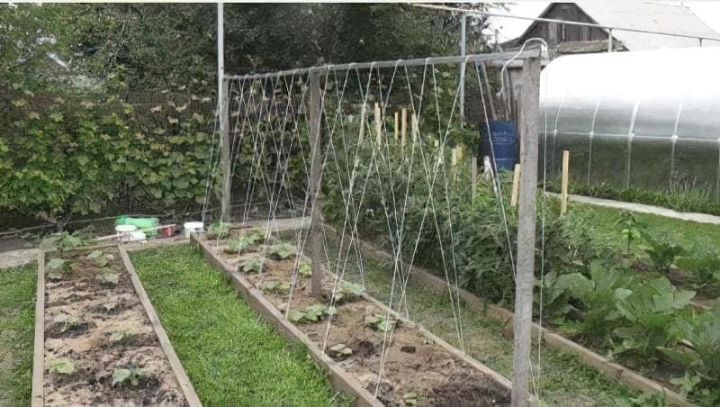 Шпалера для вирощування огірків