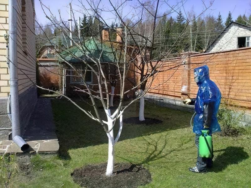 Мідний купорос для лікування і захисту рослин 3
