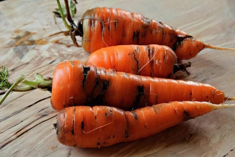 Морквяна муха - як з нею боротися 1