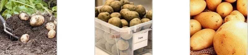 Технологія вирощування картоплі: методи і способи 2