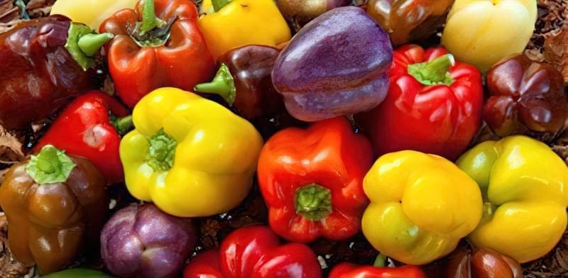 Як правильно вирощувати розсаду перцю в домашніх умовах? 43