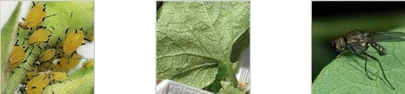 Як прискорити ріст огірків у відкритому грунті 4