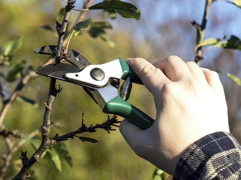 Що робити, якщо не плодоносить вишня? 5