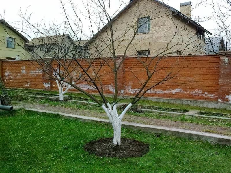 Оглядаємо сад після зими 1