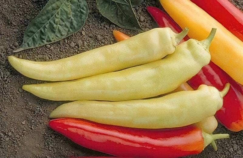 Сорти перцю для відкритого грунту, строки та особливості висадки розсади 12