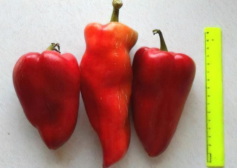 Сорти перцю для відкритого грунту, строки та особливості висадки розсади 17