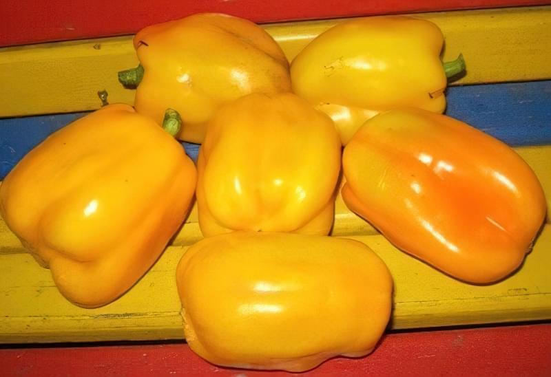 Сорти перцю для відкритого грунту, строки та особливості висадки розсади 10