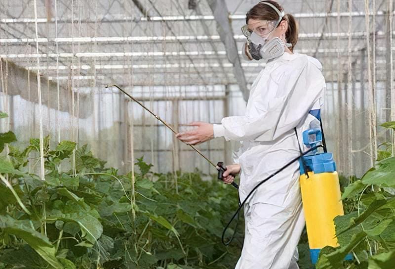 Обробка огірків фунгіцидами від пероноспорозу